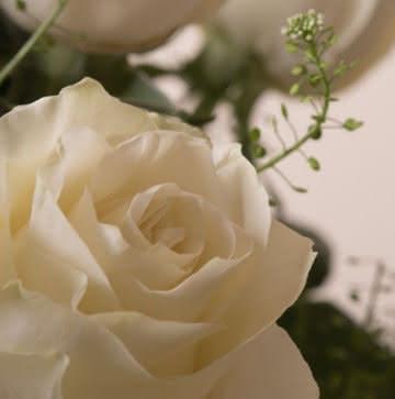 Ramos de rosas blancas