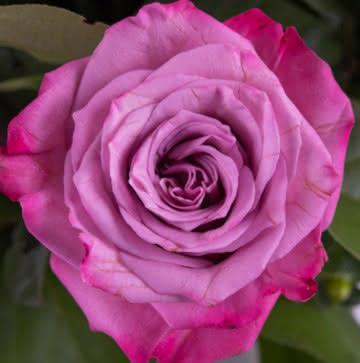 Cesta con rosas y liliums
