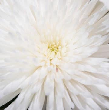 Flores funerarias para un entierro