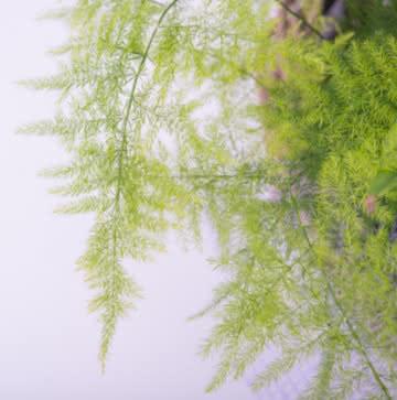 Planta variada