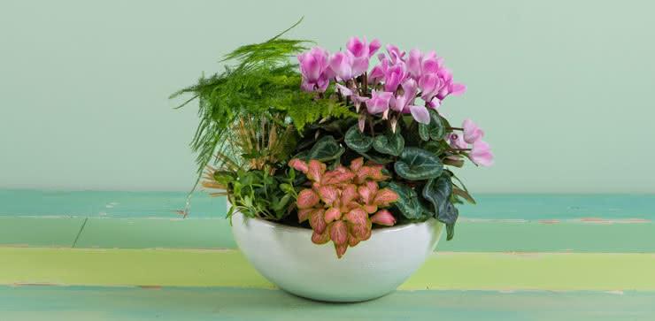 Enviar plantas a domicilio