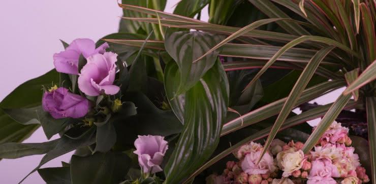 Enviar cesta de plantas a domiclio
