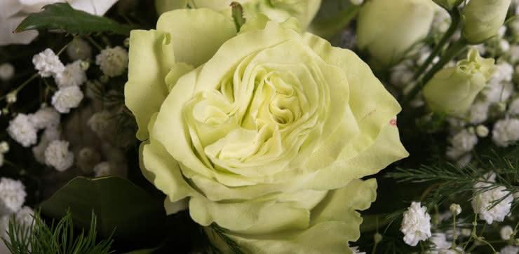 Enviar ramo de rosas tonos blancos y amarillos
