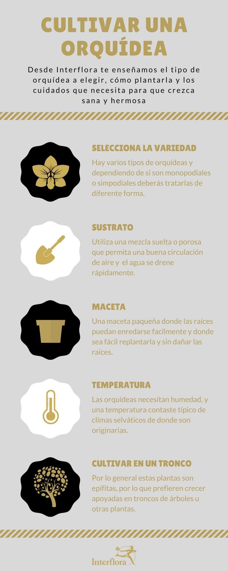 Infografía de Guía Básica para cultivar tus Orquídeas en casa