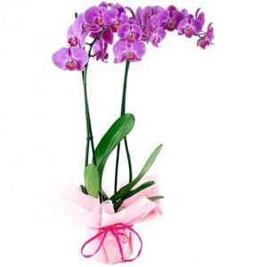 Planta Moorea para el día de la madre