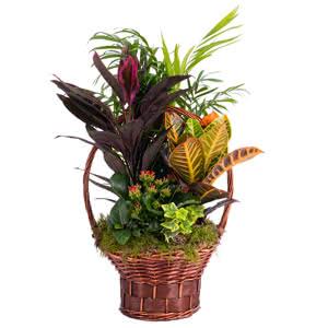 Eden - Centro de plantas variadas