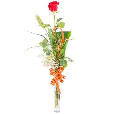 Enviar rosa tradicional para Sant Jordi con entrega en mano